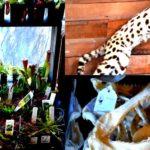 17 weirdest museums within the san fran upout blogupout blog