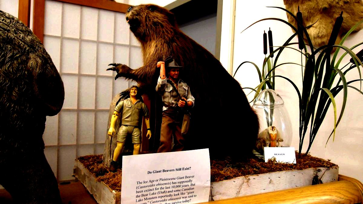 Giant beaver display