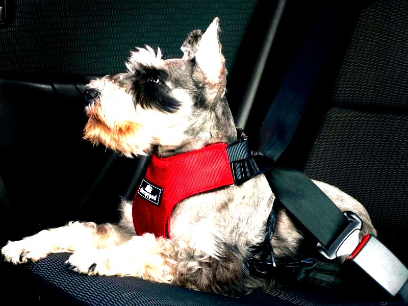 Best Dog Car Harness - Sleepypod Clickit Review
